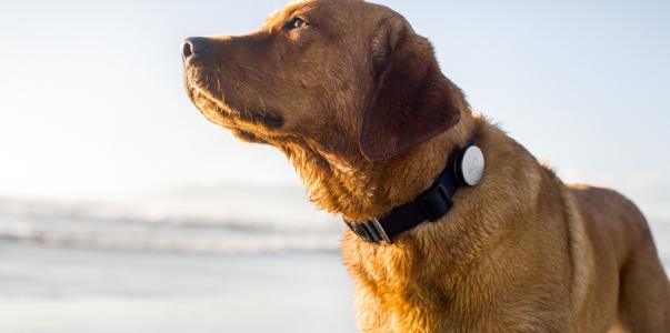 Comment choisir un collier pour son chien ?