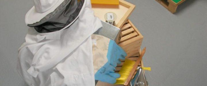 Devenir apiculteur du dimanche !