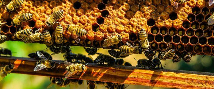 Élever des abeilles